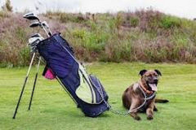 Please keep your Dogs on their Leads whilst enjoying your round