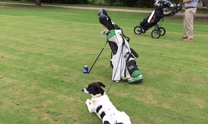 Dogs on the Golf Courses